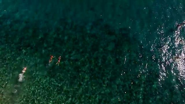 שוחים מול חופי אילת (צילום: צילום: עומר דרור וניצן דרור) (צילום: צילום: עומר דרור וניצן דרור)