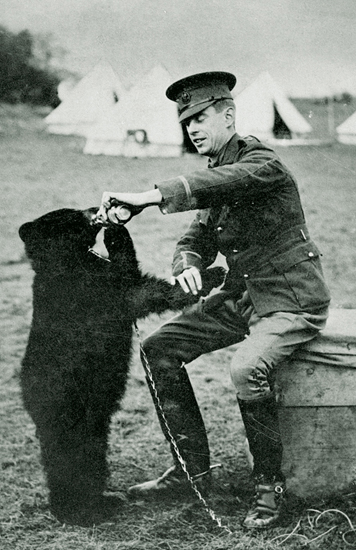 הכירו את ויני, דובת ההשראה, בצילום מ-1914 ()