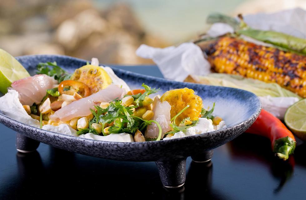 טעים ובשרני, דג טרחון (צילום: בועז לביא) (צילום: בועז לביא)