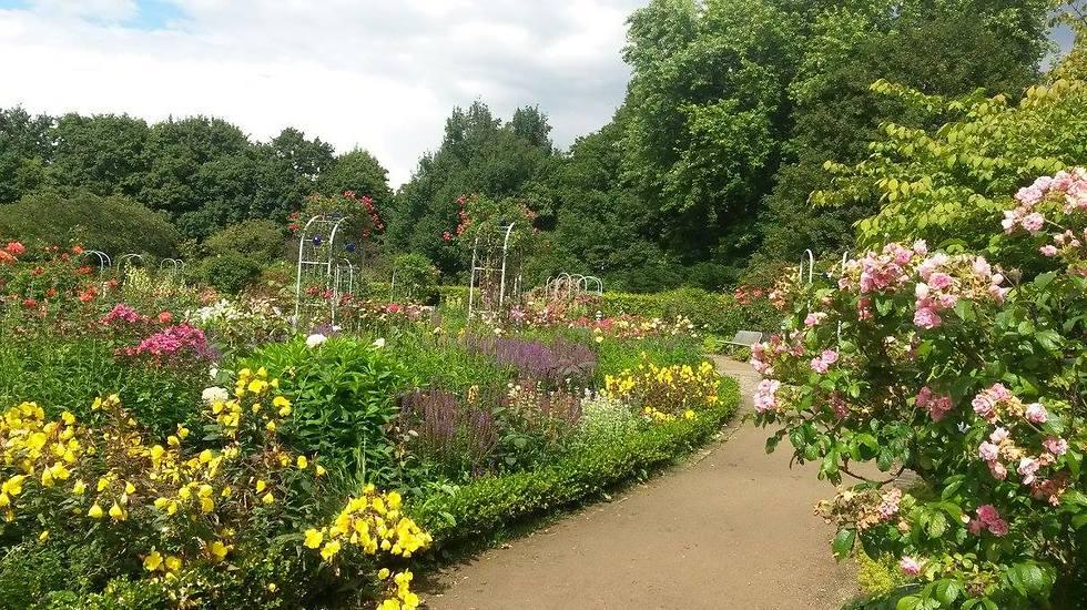 גן הצמחים והפרחים בהמבורג (צילום: עידן לוי) (צילום: עידן לוי)