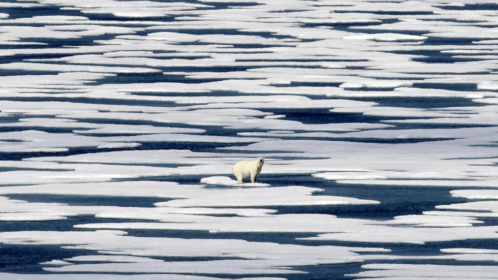דוב קוטב ניצב על גוש קרח במים הטריטוריאליים של קנדה (צילום: AP) (צילום: AP)