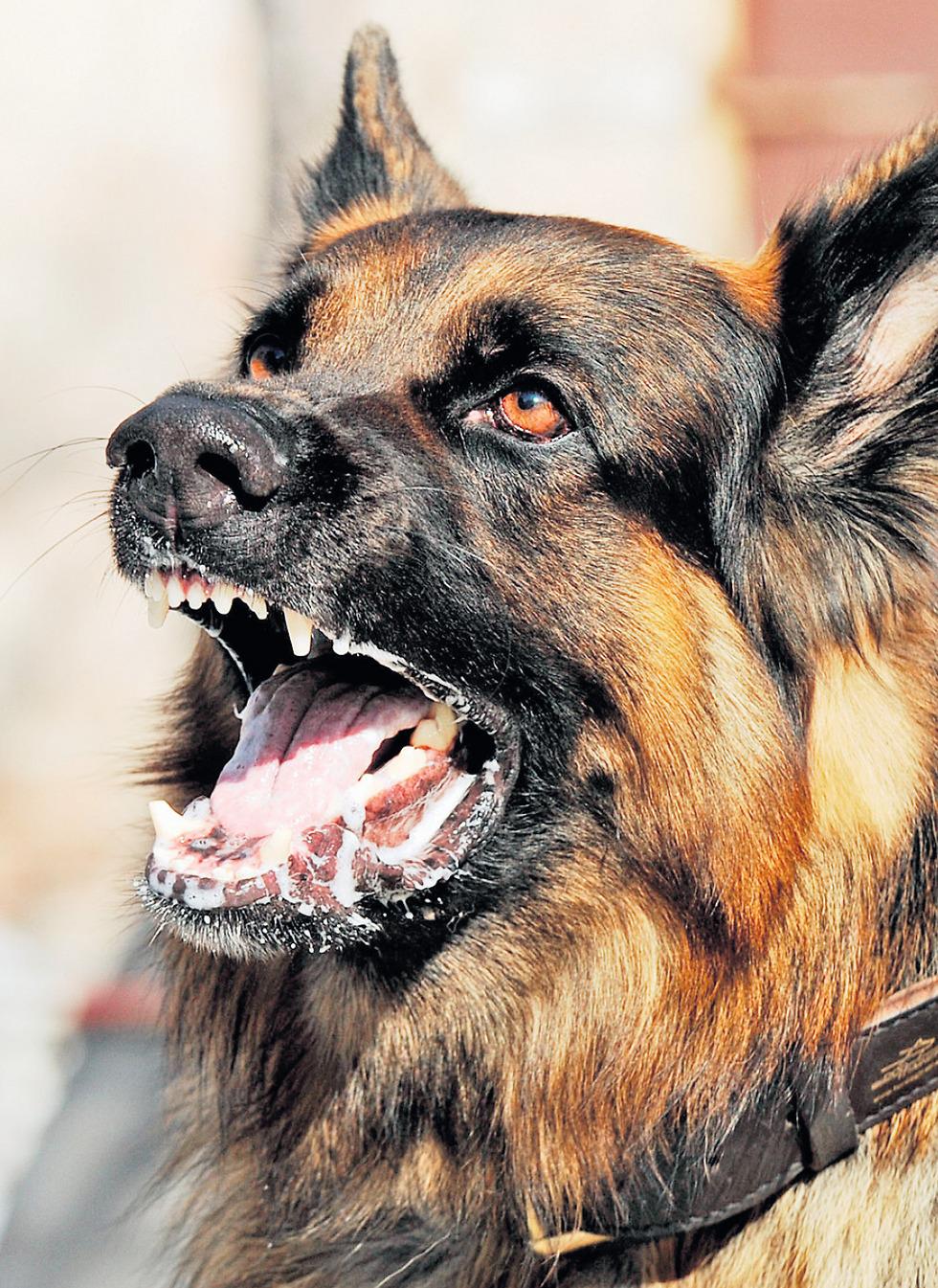 ייאסר להחזיק ביותר משני כלבים ()