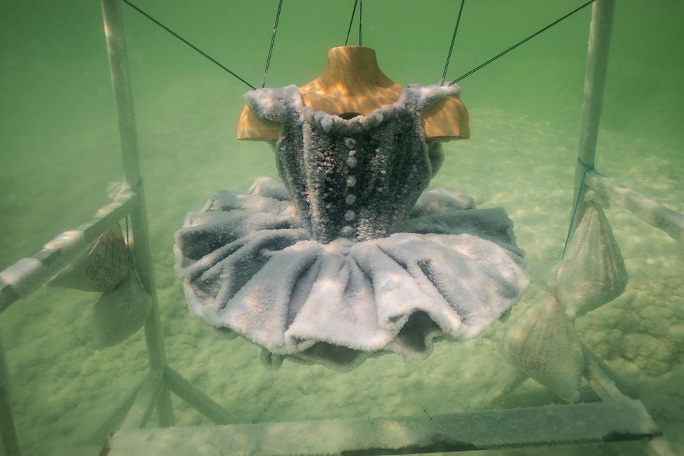 שמלת טוטו במים (צילום: יותם פרום) (צילום: יותם פרום)