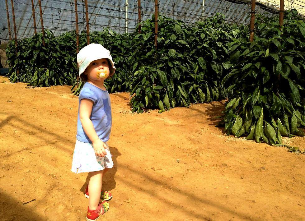 בתו של גלה החקלאי יכולה להסתובב בבטחה
