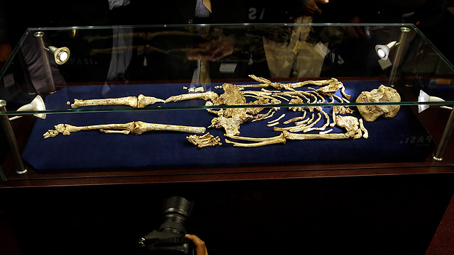 השלד במוזיאון בדרום אפריקה (צילום: AP)