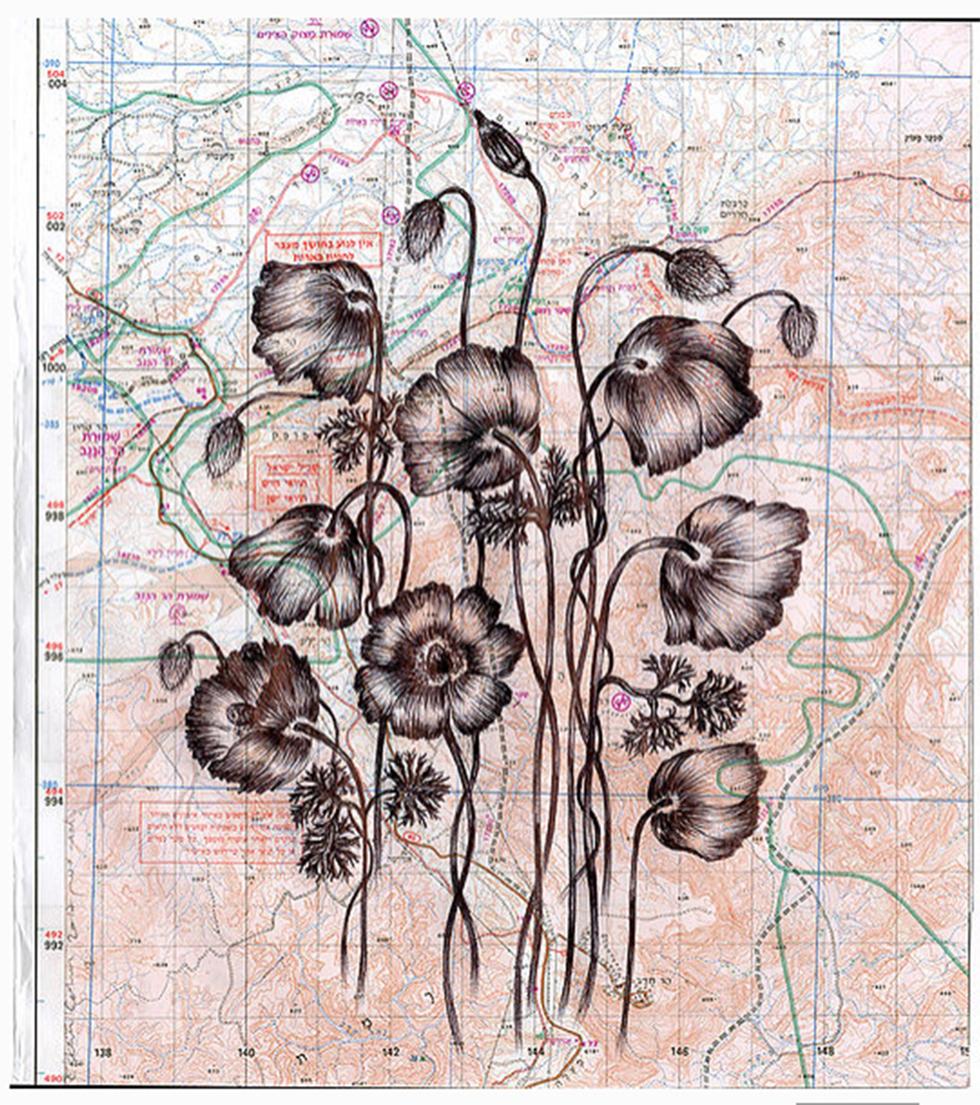 רישום כלניות על רקע מפה. עבודתה של אסתר כהן ()