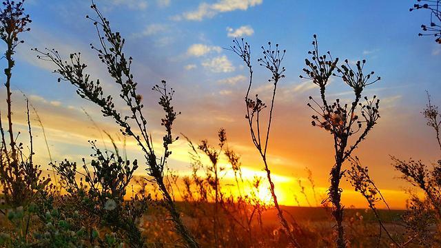 שקיעה חמימה בשדות נגב (צילום: רועי עידן)