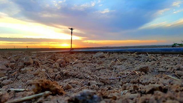 בצורת בשדות נגב (צילום: רועי עידן)