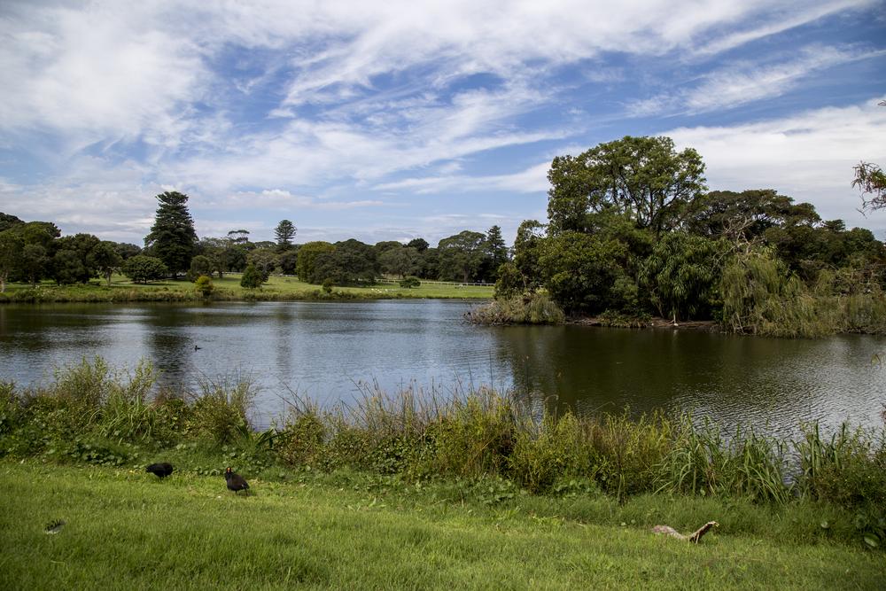 הפארק היפה של סידני: Centennial Park (צילום: shutterstock)