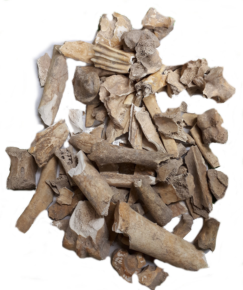 """עצמות בעלי חיים מחצור  (צילום: ד""""ר נמרוד מרום, המכללה האקדמית תל-חי) (צילום: ד"""
