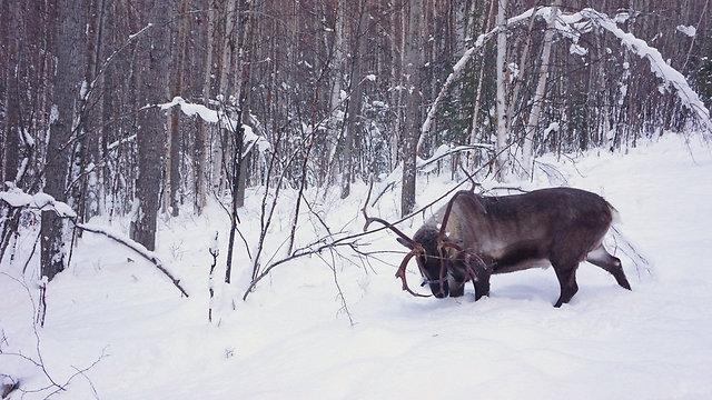 בעבר נערם הרבה יותר שלג. ארכיון (צילום: shutterstock)