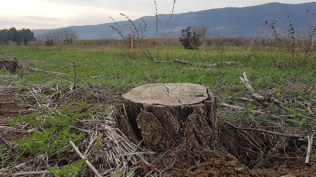 The nectarine orchard had been uprooted (Photo: Assaf Kamar)