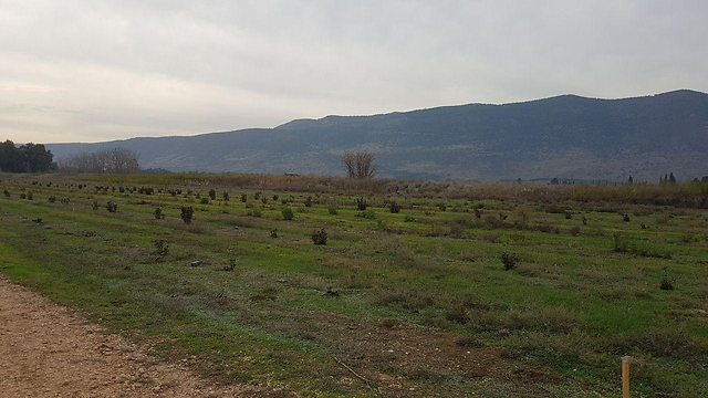 כפר בלום. חקלאות במשבר (צילום: אסף קמר) (צילום: אסף קמר)