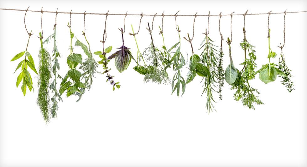 מחליטות ועד שמנים אתריים. הירוקים והבריאים (צילום: Shutterstock)