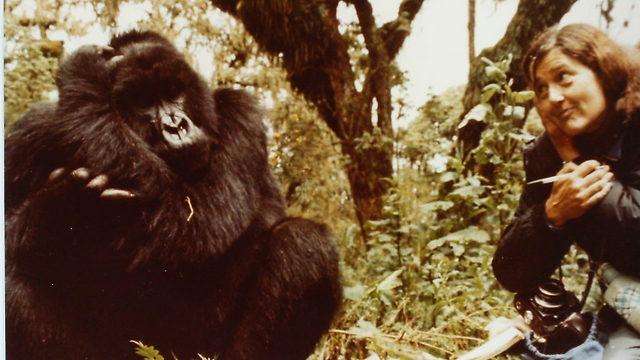 (צילום: מתוך אתר gorillafund.org) (צילום: מתוך אתר gorillafund.org)