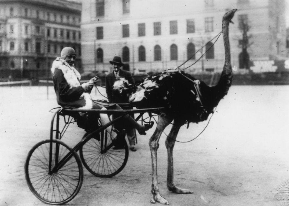 """הרקדנית והזמרת ג'וזפין בייקר, 1920. חלק מ""""הרנסאנס של הארלם"""" (צילום: gettyimages) (צילום: gettyimages)"""