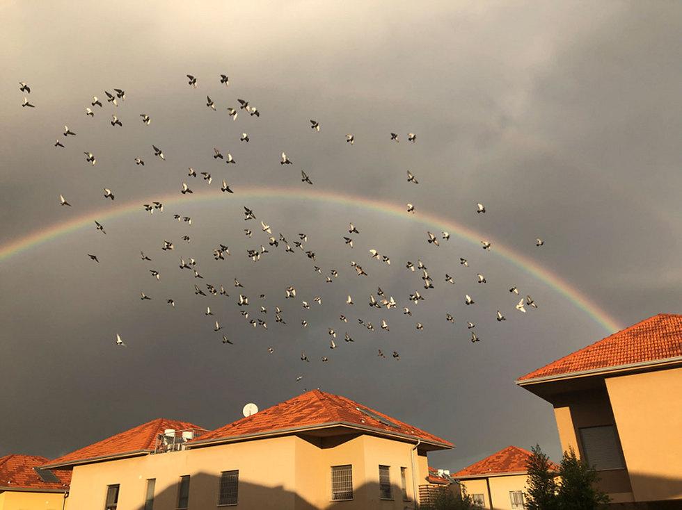Rainbow in Pardes Hanna-Karkur (Photo: Nettanel Sason)