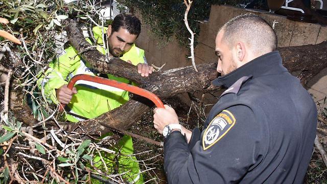 עץ שקרס במושב אליכין. עצים קרסו ברחבי הארץ (צילום: דוברות המשטרה) (צילום: דוברות המשטרה)