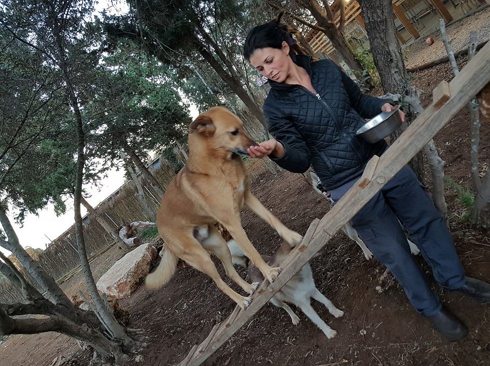 הילדים שמשתתפים בפרויקט וגם הכלבים זקוקים ליד מקצועית, אוהבת ומלטפת כדי להתגבר על קשיי העבר (באדיבות הרוח הישראלית)