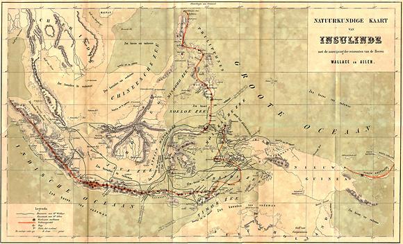 אסף 126 אלף מינים שונים. מפה של מסעות וולאס בארכיפלג המלאי (קווים שחורים דקים) (צילום: מתוך ויקיפדיה)