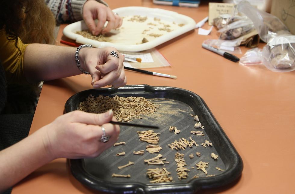 חוקרים את העצמות (צילום: אוניברסיטת חיפה)
