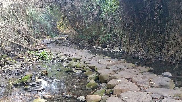 שמורת הטבע תל דן (צילום: איתן ניסים) (צילום: איתן ניסים)