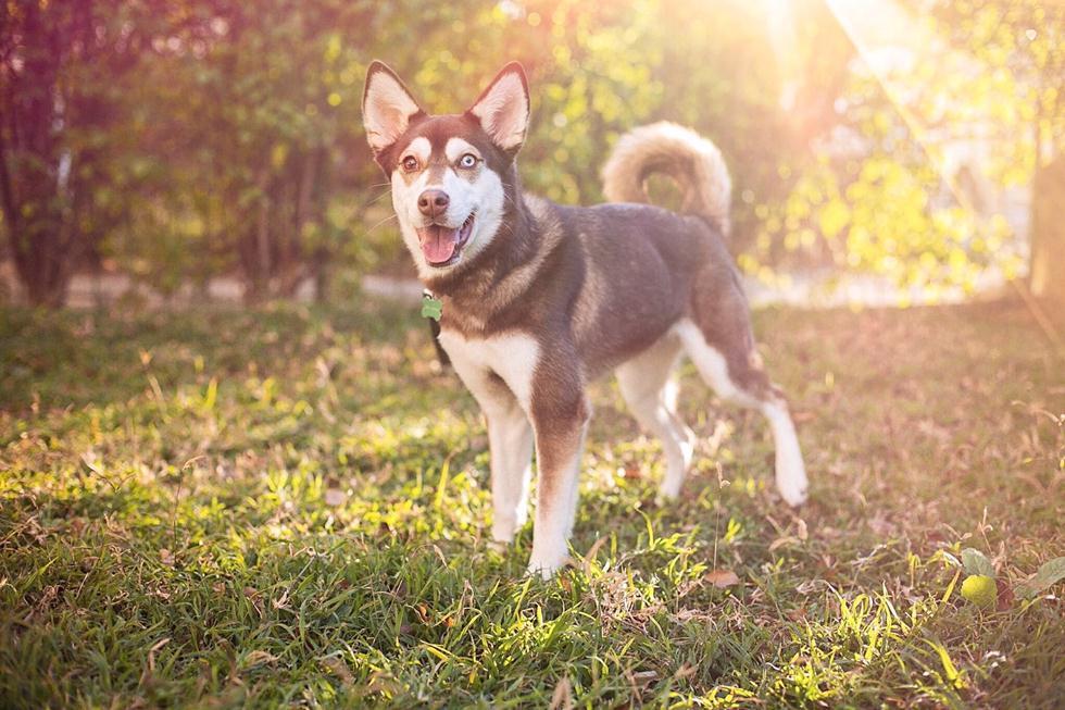 (צילום: שיר חסין, אדופט - בית מחסה לכלבים) (צילום: שיר חסין, אדופט - בית מחסה לכלבים)