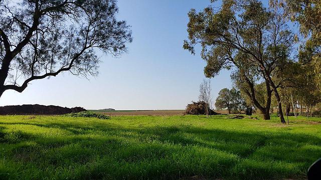 ירוק בשדות נגב  (צילום: רועי עידן) (צילום: רועי עידן)