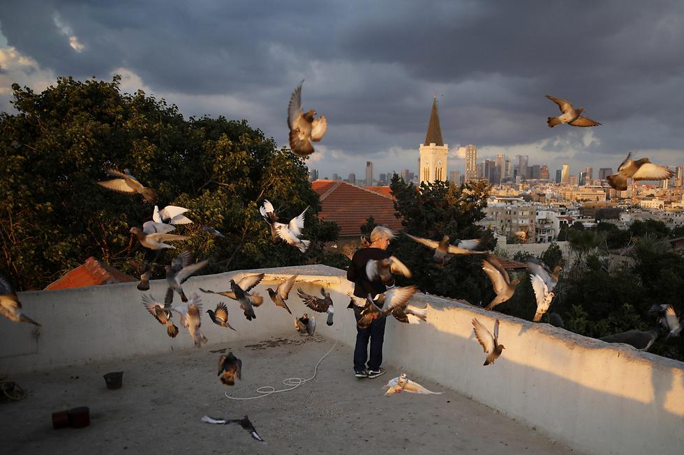 תל-אביבית מאכילה ציפורים כמדי יום בשקיעה על גג בתל-אביב (צילום: רויטרס) (צילום: רויטרס)