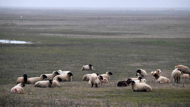 אל תהיו עדר (נקוד או טלוא) (צילום: AFP) (צילום: AFP)