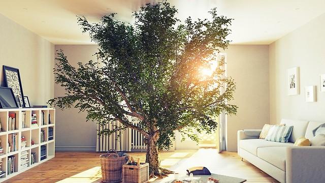 חיים בריאים יותר וחסכוניים יותר. בית ירוק (צילום: shutterstock) (צילום: shutterstock)
