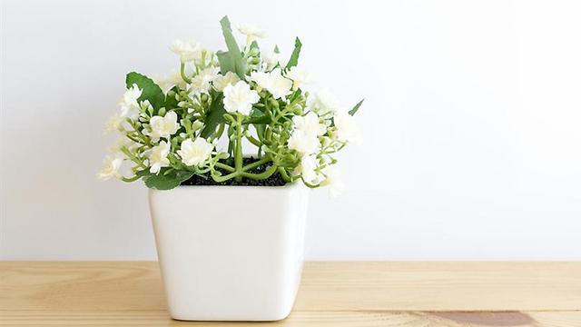 יסמין: פרחים קטנים המפיצים ריח הגורם להרפיה  (צילום: shutterstock) (צילום: shutterstock)