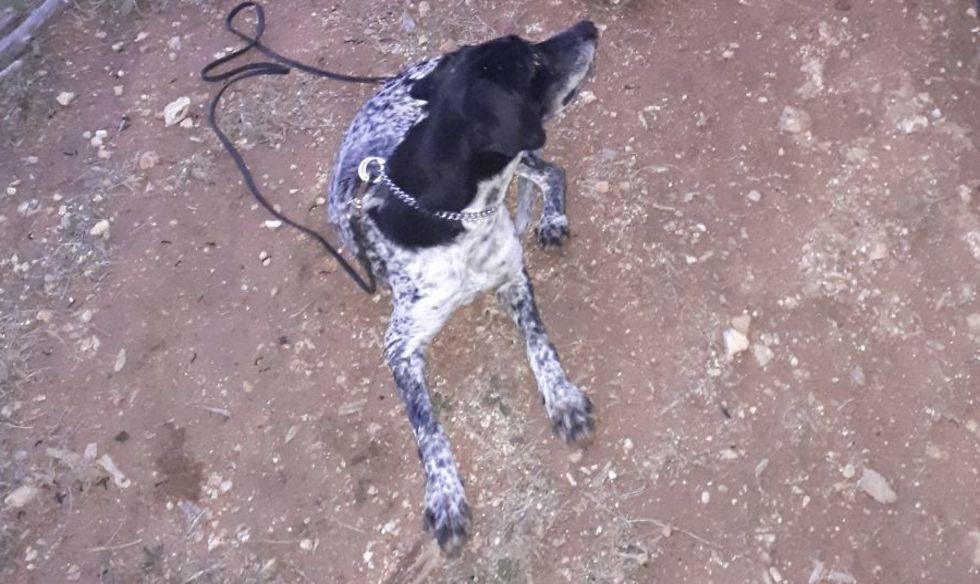 """קאלי הכלבה. מצאה את הרגל של """"נחמה"""" עם טבעת הזיהוי תוך 40 דקות בשטח (צילום: ספי סהר, """"מגן א.ר.ת"""")"""