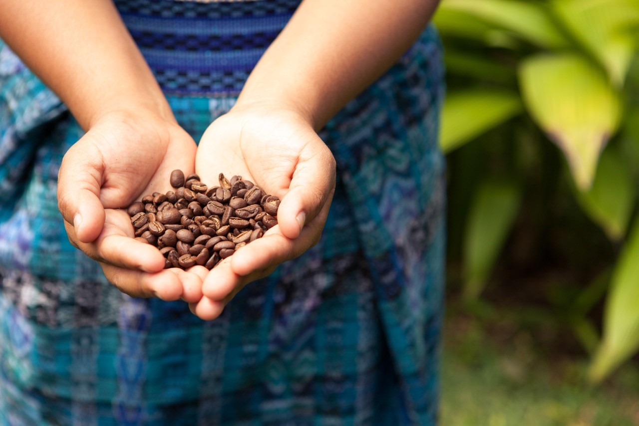 מטעי הקפה של קוסטה ריקה.  (צילום: shutterstock) (צילום: shutterstock)