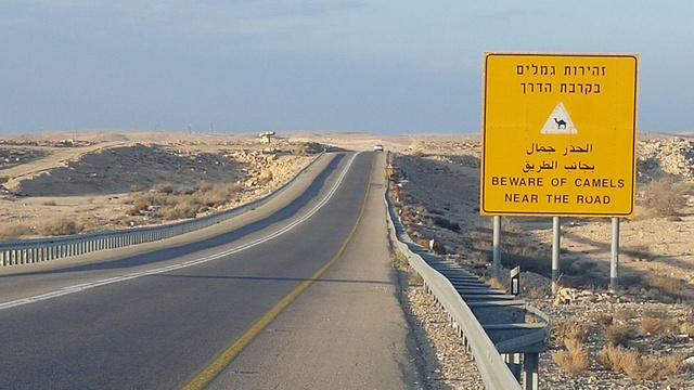 תמרור המזהיר מגמלים בכביש 40 (צילום: בראל אפרים) (צילום: בראל אפרים)