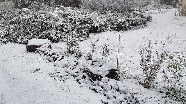 שלג באלרום (צילום: שגיא ציפורי) (צילום: שגיא ציפורי)