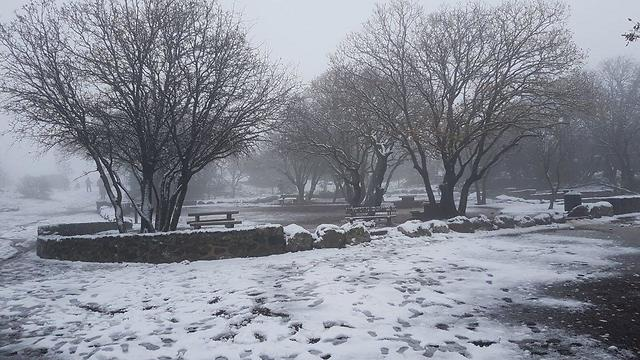 פתיתי שלג בעין זיוון (צילום: אפי נעים) (צילום: אפי נעים)