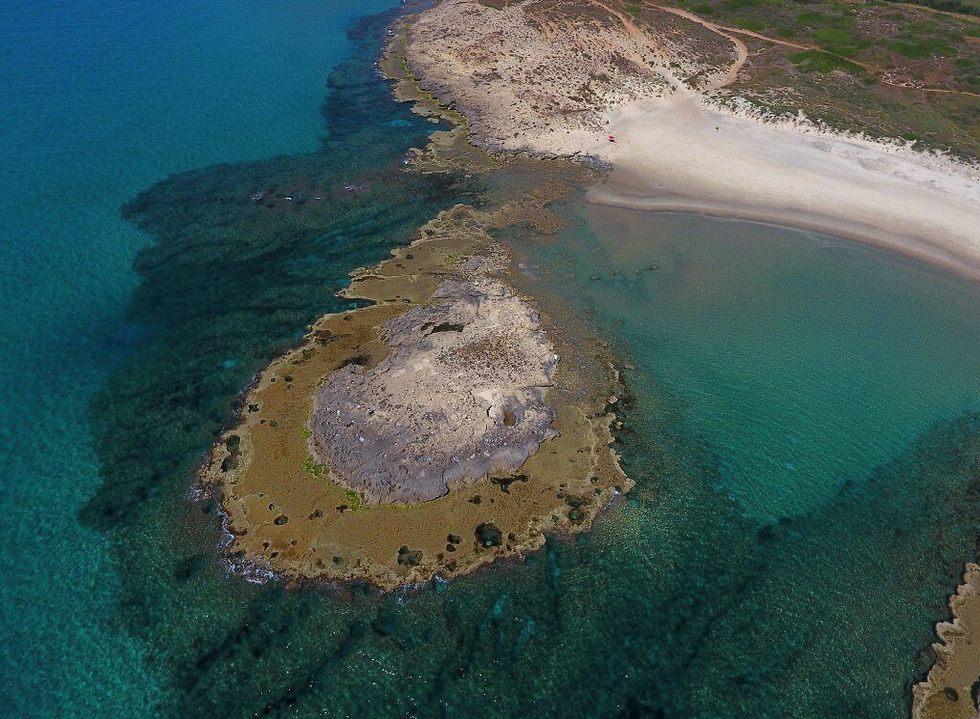 """שוניות מעל ומתחת למים בשמורת חוף הבונים (צילום: ד""""ר גיל רילוב) (צילום: ד"""