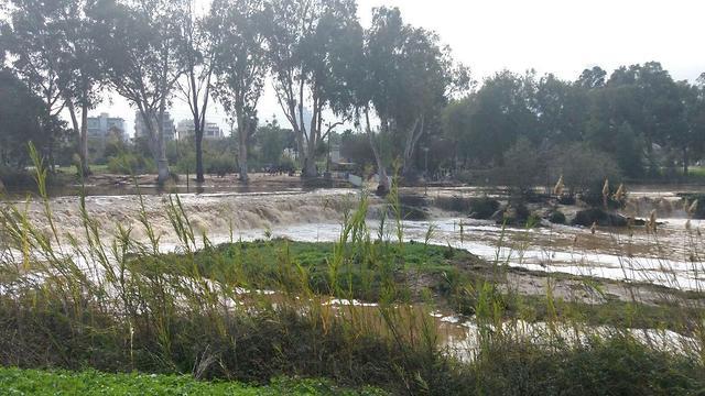 מים שוצפים בירקון, הבוקר (צילום רועי צוברי) (צילום רועי צוברי)