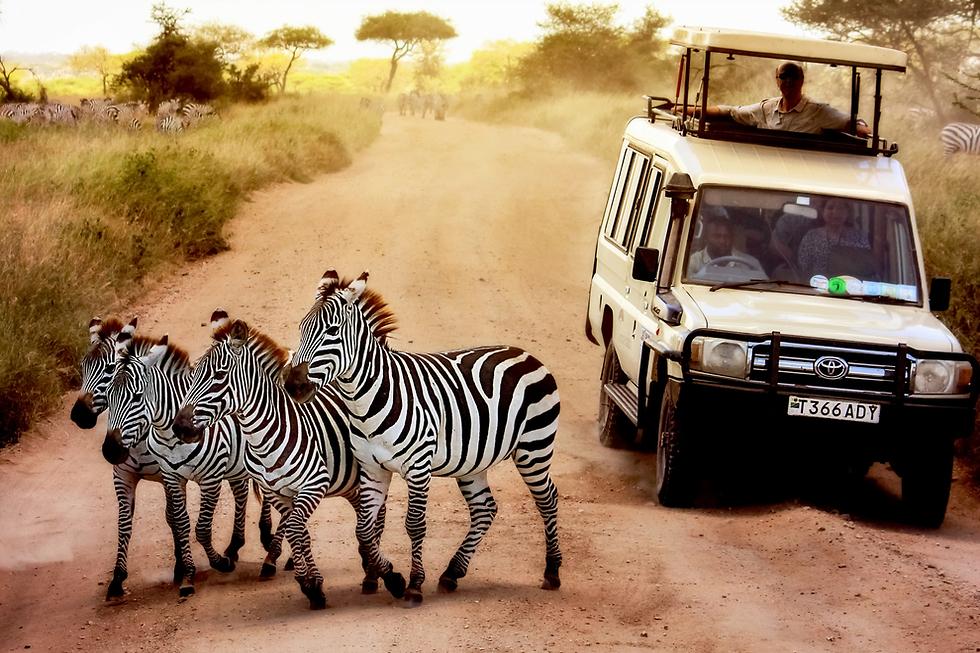 ספארי במיטבו: השמורות בטנזניה (צילום: shutterstock) (צילום: shutterstock)