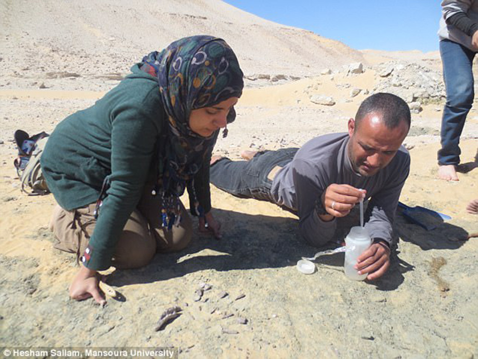 כמה מהשרידים שנמצאו במצרים