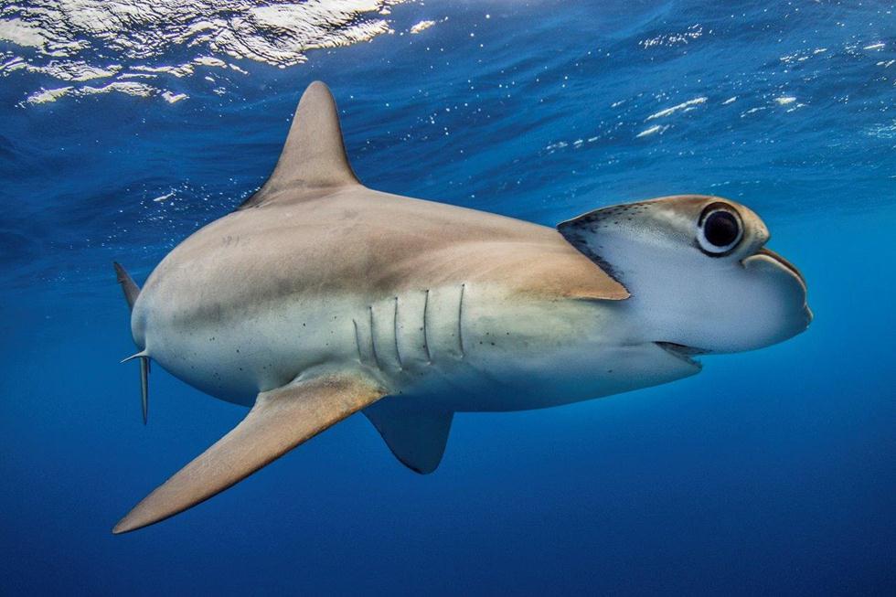מקום 4   כרישים   Filippo Borghi, Italy