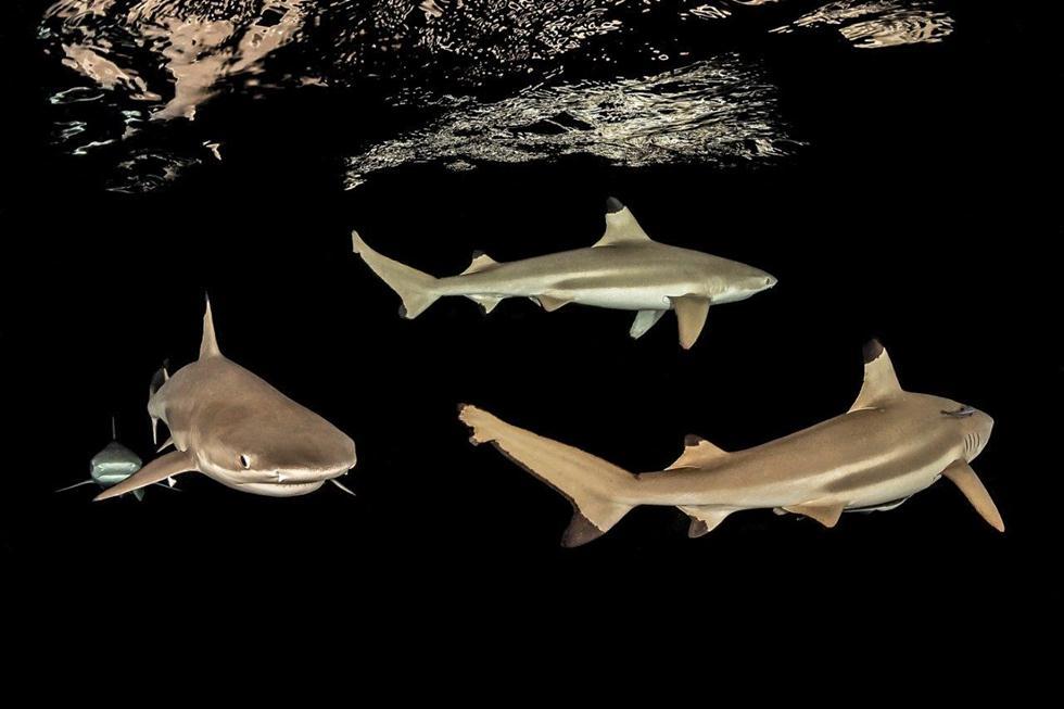 מקום 5   כרישים   Tobias Friedrich, Germany