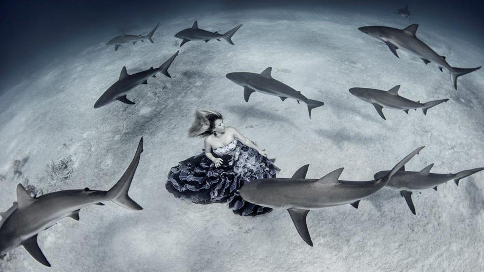 מקום 1   אופנה תת ימית   Ken Kiefer, USA