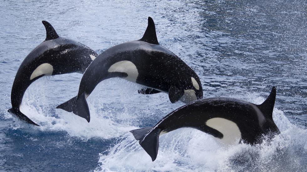 מופעי בידור עם יונקים ימיים (צילום: shutterstock)