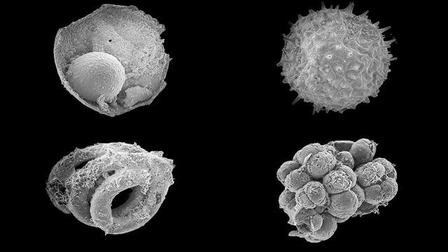 מיקרו מאובנים של היצורים הקדומים שנמצאו בצפון מוגוליה. קוטרו של כל אחד הוא כ-0.2 מילימטר (צילום: מתוך המחקר) (צילום: מתוך המחקר)