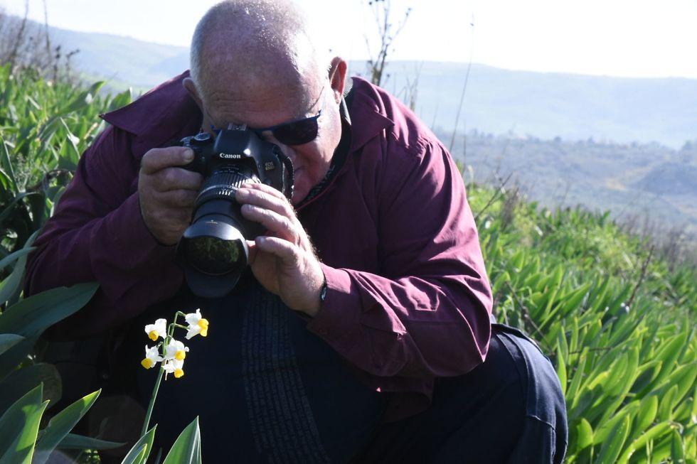 גבעת הנרקיסים (צילום: אביהו שפירא) (צילום: אביהו שפירא)