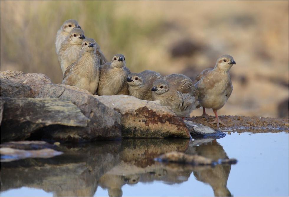 (צילום: גל ביסמוט, רשות הטבע והגנים) ()