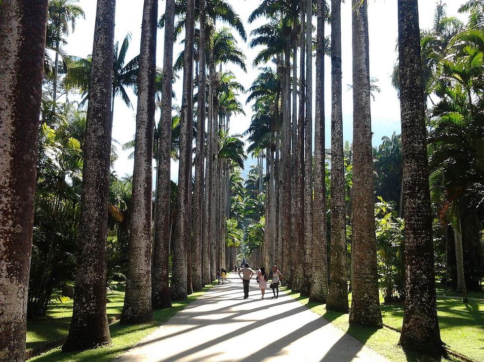 רגע של שקט וטבע: הגן הבוטני jardim botanico  (צילום: גלעד שריקי) (צילום: גלעד שריקי)