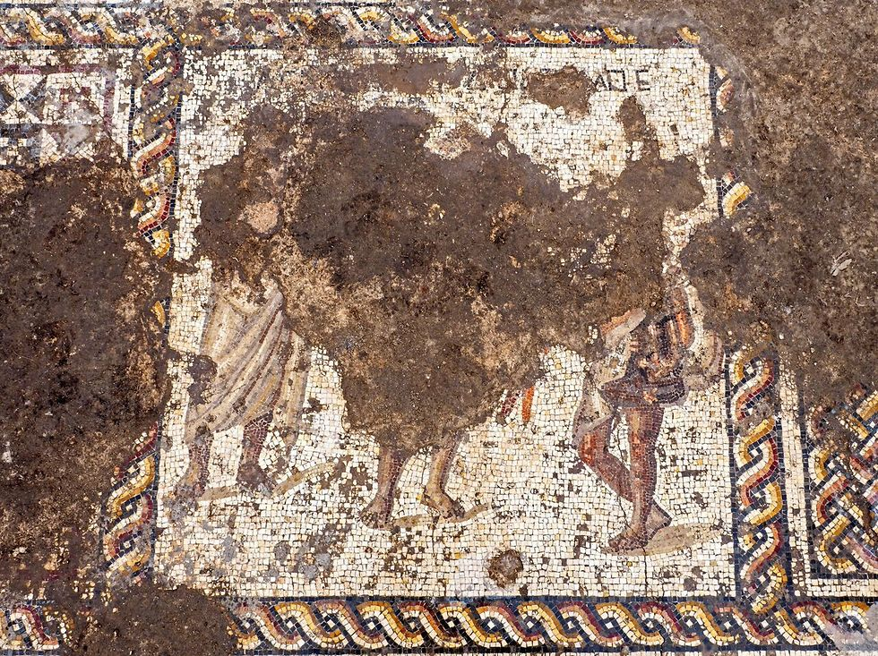 The mosaic uncovered in Caesarea  (Photo: Assaf Peretz, Israel Antiquities Authority)